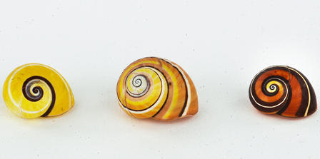 Three snail shells sit side by side, each exhibiting a different striped, multicolored pattern.