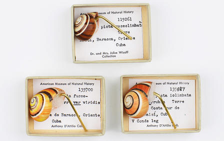 Three striped snail shells are displayed in individual small boxes, the backgrounds of which show specimen numbers and collection data.