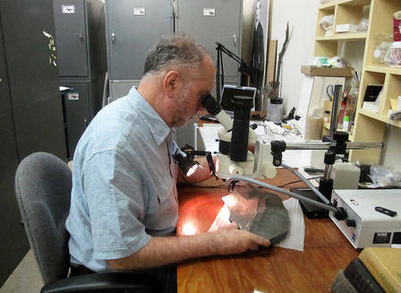 John Maisey sits at a desk and looks through a microscope at the Doliodus problematicus fossil, metal storage cabinets and other lab equipment in view