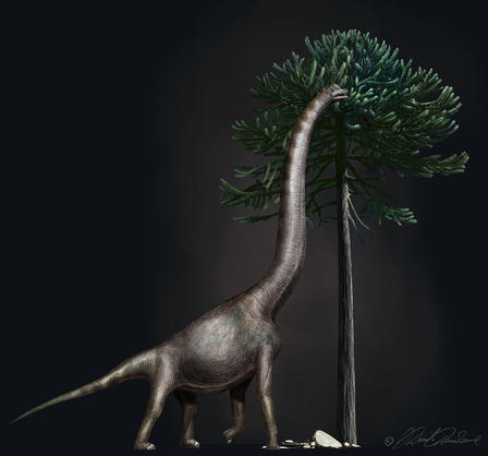 Rendering of a brachiosaurus stretching its long neck up to the top of an Araucaria tree to grab a bit of its leaves.