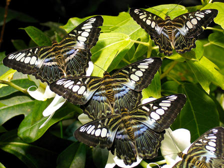 Butterfly Vivarium Closing Out 20th Season