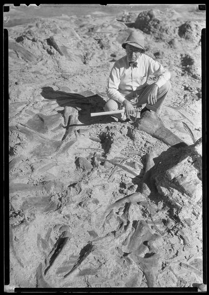 Barnum Brown at Howe Quarry, Shell, Wyoming, in 1934 AMNH/132806