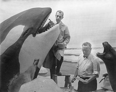 Museum artists Ray deLucia and Matt Kalmenoff working on a Killer Whale model in 1967
