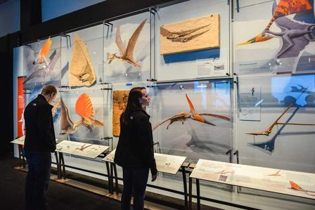 Visitors in Pterosaurs exhibition