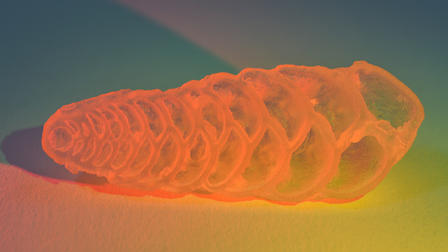 3D-printed replicas can help researchers investigate the structure of foram shells. ©AMNH/D.Finnin