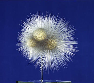 This glass model of Globigerina bulloides on exhibit at the Museum at the turn of the 20th century.  ©AMNH
