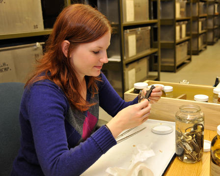 Antonia Florio examines a Furcifer lateralis chameleon—one of the species she studied in Madagascar—in the Museum's Department of Herpetology. © AMNH/D. Finnin