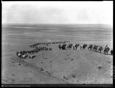A camel caravan of 125 carrying food and equipment for the Central Asiatic Expedition in 1928.  ©AMNH/410962 Digital Special Collections