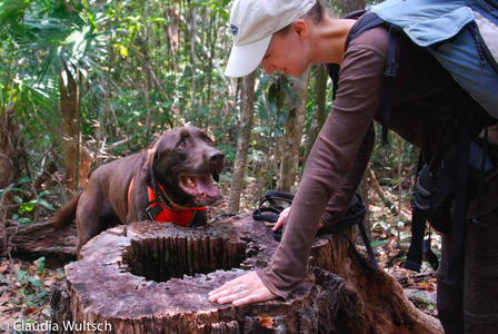 Bruiser in the field assisting Museum Postdoctoral Fellow Claudia Wultsch. © AMNH/C. Wultsch