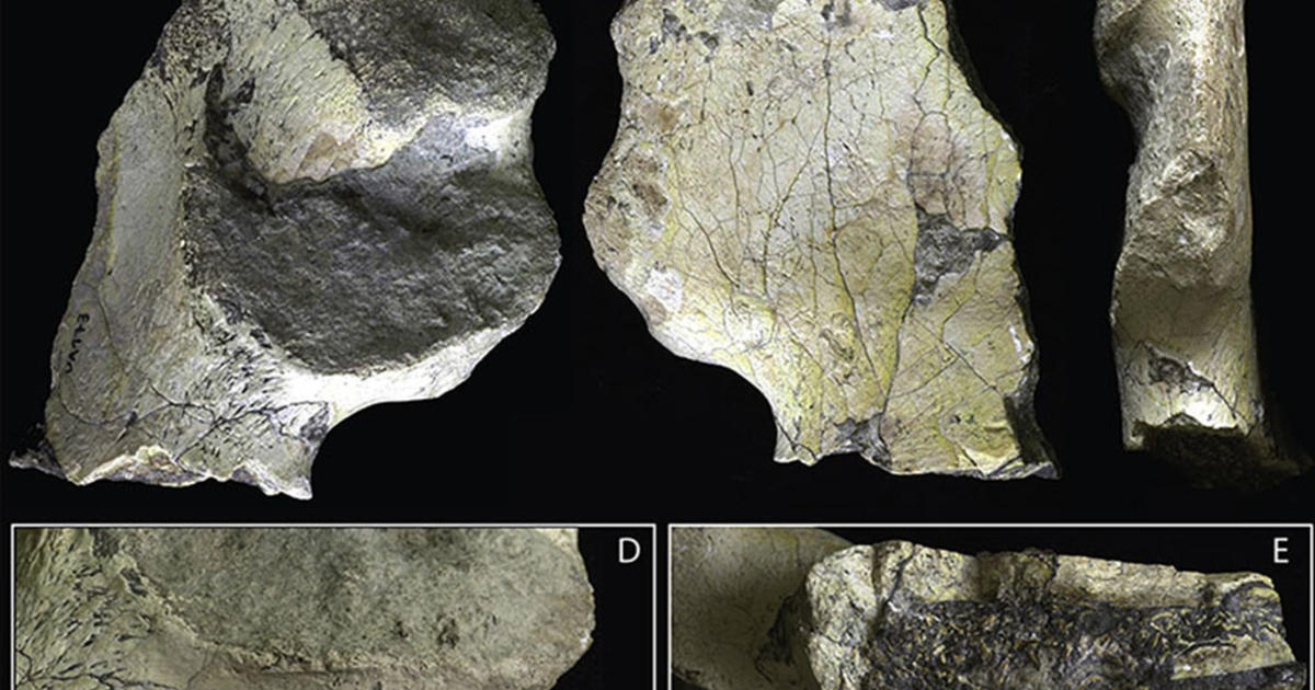 One-Million-Year-Old Hominin Pelvic Bone Features Modern Human Traits