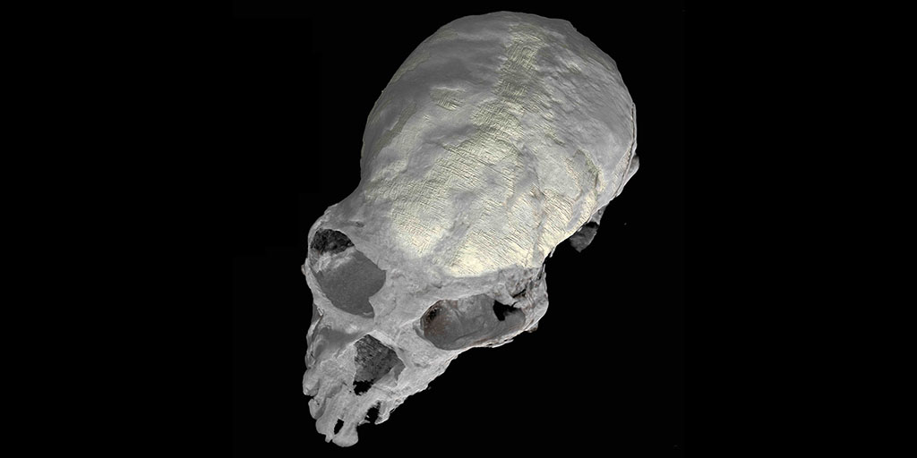 Chilecebus Fossil Skull Sheds Light on Evolution of Primate Brains   AMNH