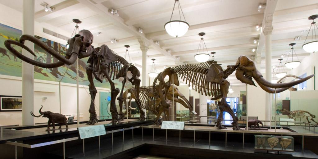 https://www.amnh.org/var/ezflow_site/storage/images/media/amnh/images/explore/news-and-blogs/blog-images-2019/blog-images-january-2019/mammoth-mastodon-1024-512/4132430-1-eng-US/mammoth-mastodon-1024-512.jpg
