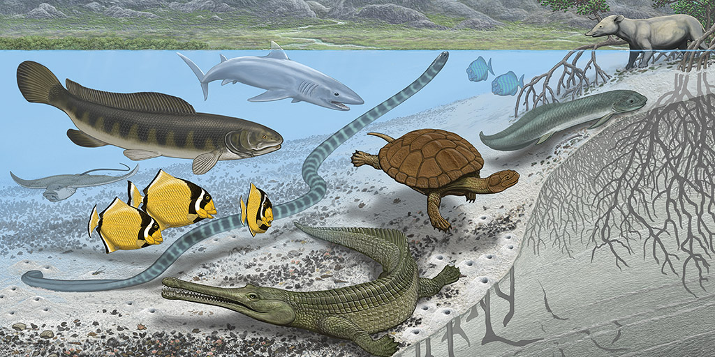 Researchers Find Extinct Species in Ancient Sahara Seaway | AMNH