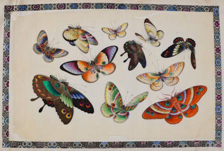 In China in the 1800s, beautiful watercolors of fanciful butterflies were painted into souvenir books.  © AMNH/D. Finnin