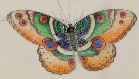 From a 19th-century souvenir book made in China, this butterfly, and many others like it, were painted to be beautiful, but they don't represent actual species.  © AMNH/D. Finnin
