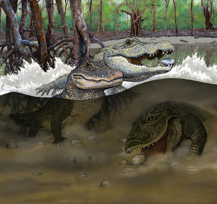 "This reconstruction shows proto-Amazonian ""mega-wetland"" swamps from the late middle Miocene (about 13 million years ago) and the three new species of crocodiles discovered from fossils uncovered in northeastern Peru: Kuttanacaiman iquitosensis (left), Caiman wannlangstoni (right), and Gnatusuchus pebasensis (bottom). The extinct caimans are thought to have thrived on the unusually high abundance and diversity of mollusks like clams and snails that lived in the area. © Javier Herbozo"