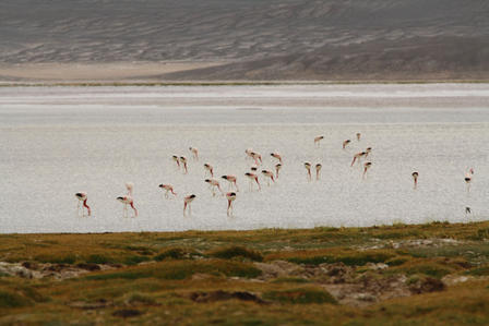 Often home to hundreds of flamingos, Laguna Purulla is now protected thanks to conservation efforts. ©F.Arengo