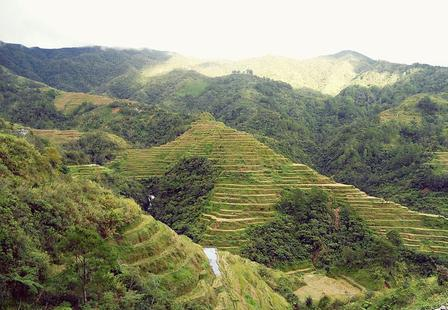 These elaborate rice terraces are cultivated by the Ifugao people in the mountains of northern Luzon, in the Philippines. Sam Isleta
