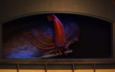 American Museum of Natural History – giant squid and sperm whale