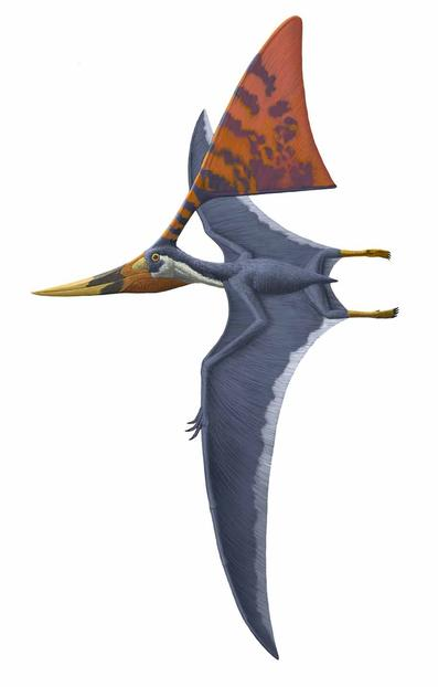 Pterosaurs Flight in t...