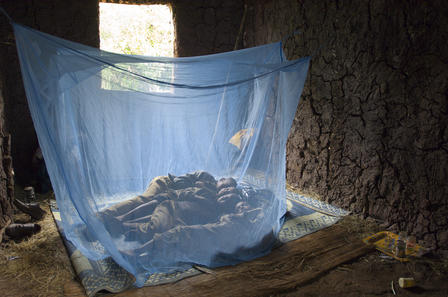 Four siblings rest peacefully beneath a long-lasting insecticide-treated bed net. The net keeps away mosquitoes that can carry lymphatic filariasis and malaria. Ethiopia, 2007  © The Carter Center/L. Gubb