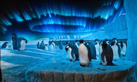 Emperor Penguin diorama in Race to the End of the Earth
