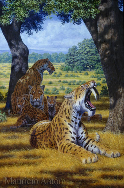Life reconstruction of a family group of Smilodon fatalis.  Illustration by and courtesy of Mauricio Antón, from his 2013 book Sabertooth.