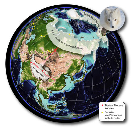 Arctic Fox Tibet Connection Map