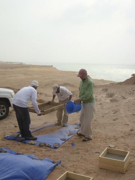 The research team searching for tiny fossils at the monkey discovery site on Shuwaihat Island, United Arab Emirates, in January 2009.  ©Mark Beech