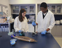 Science Research Mentoring Program Lab
