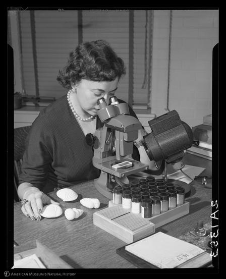 Messina examining specimens under a microscope. © AMNH