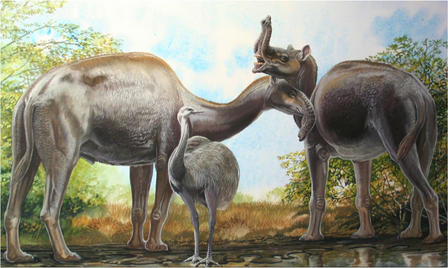 The South American native ungulate Macrauchenia patachonica may have had a mobile proboscis, as pictured here. Illustration © Peter Schouten