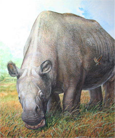 Analysis of fossil collagen shows that unusual South American ungulates (like Toxodon platensis, seen here) were more closely related to horses and their allies than to other living placental mammals. Illustration © Peter Schouten