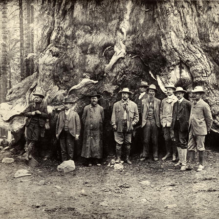Then-President Theodore Roosevelt, at center, poses with John Muir (to his left) at the foot of a giant sequoia tree in Mariposa Grove, California, in 1903.  Courtesy of Houghton Library, Harvard University