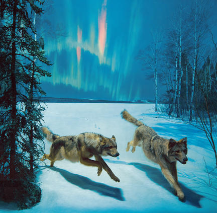 Dances with Wolves Quotes