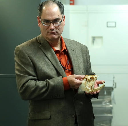 Scott Schaefer holds the cranium of the Vampire tetra, a voracious predator that is a close relative of the neon and cardinal tetra popular in the aquarium trade. This specimen, one of more than 2 million in the Museum's ichthyology collection, is from Venezuela.  ©AMNH/E. Chapman