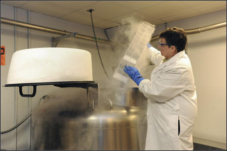 Monell Collection liquid nitrogen