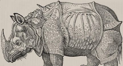 Natural Histories Rhino by Durer