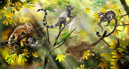 A reconstruction of arboreal mammals in a Jurassic forest. The three animals on the left side represent the three new species of euharamiyidan mammals. The other two represent a gliding species and another euharamiyidan, respectively, that were reported earlier.  © Zhao Chuang