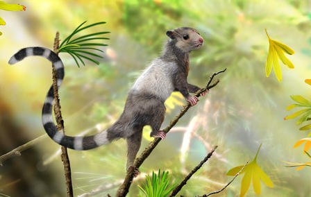 This is a reconstruction of the new mammal species, Xianshou songae. This mouse-sized animal was a tree dweller in the Jurassic forests and belonged to an extinct group of Mesozoic mammals called Euharamiyida. © Zhao Chuang
