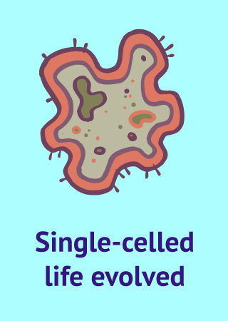 bacteria icon with text Single-celled life evolved