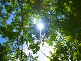 Sun seen through the leaves of a tree