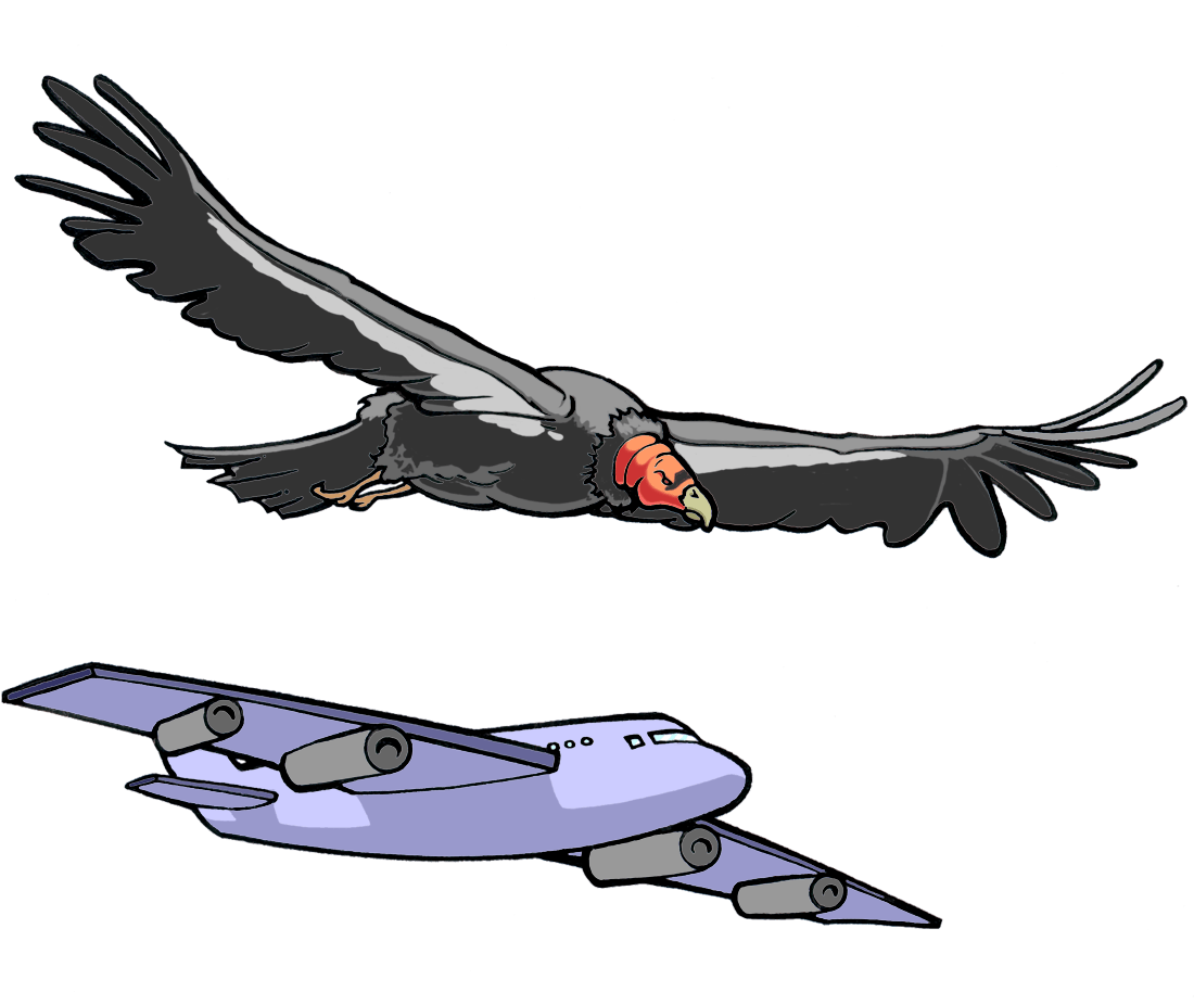 drawing of a flying vulture and a jet plane, showing their similar body and wing positions.