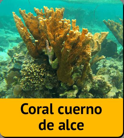 Cuba wildlife matching game coral reef for Como llegar a jardines de la reina cuba