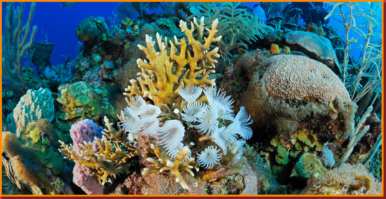 cuba wildlife matching game coral reef