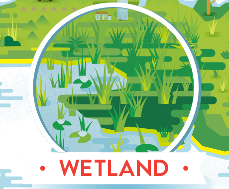 wetland with alligator and trogon
