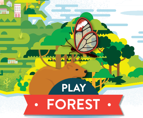 Play Forest