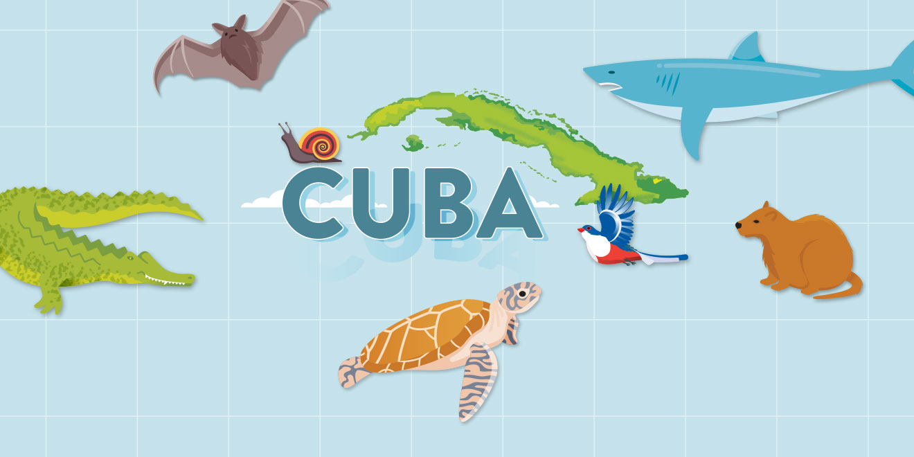 Cuban Wildlife Matching Game