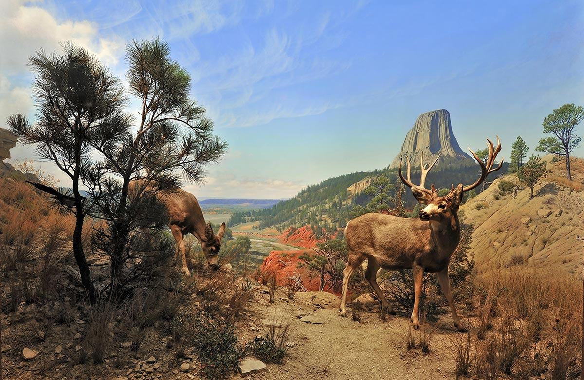 """Devil's Tower, Wyoming"" (Two deer grazing on a hill)"