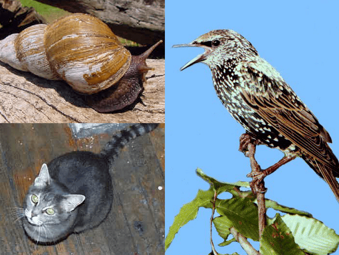 examples of invasive species: cat, European starling and snail